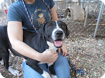 Labrador Retriever/Terrier (Unknown Type, Medium) Mix Dog for adoption in Fair Oaks Ranch, Texas - Lil'Deb