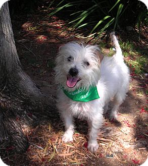 Terrier (Unknown Type, Small) Mix Dog for adoption in El Cajon, California - Baxter