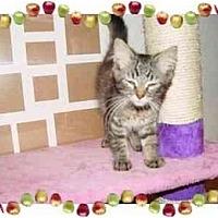 Adopt A Pet :: Jami - KANSAS, MO