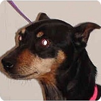 Adopt A Pet :: Liza - Nashville, TN
