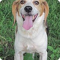 Adopt A Pet :: Briar - Flowery Branch, GA