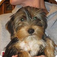 Adopt A Pet :: Winkie Walker Jr. - Salem, NH