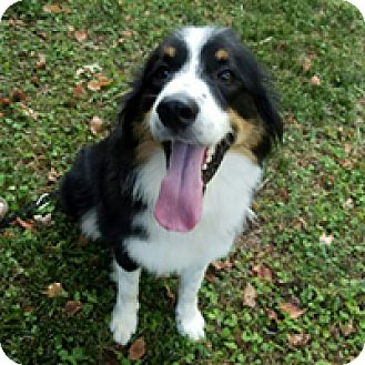 Border Collie Mix Dog for adoption in Charleston, South Carolina - Duncan