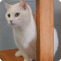 Adopt A Pet :: Cotton (C16-044) - Lebanon, TN