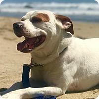 Adopt A Pet :: Dustin - Sunnyvale, CA