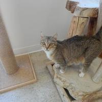 Adopt A Pet :: Darla - Monroe, WI