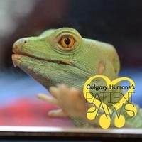 Adopt A Pet :: Bernadette - Calgary, AB