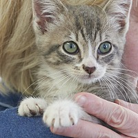 Adopt A Pet :: Izzy - Chattanooga, TN