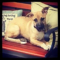 Adopt A Pet :: Stella - Grand Bay, AL