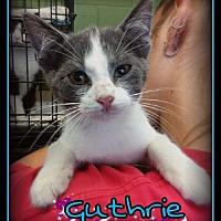 Adopt A Pet :: Guthrie - Hartford City, IN