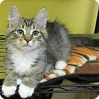Adopt A Pet :: Mask - Mobile, AL