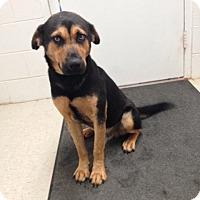 Adopt A Pet :: Chet - Lancaster, VA