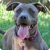 Adopt A Pet :: Merry MABEL - Phoenix, AZ