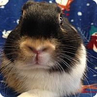 Adopt A Pet :: Sterling - Williston, FL
