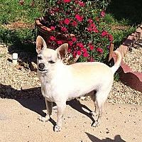 Adopt A Pet :: Giovanni - Fullerton, CA