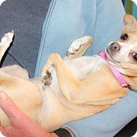 Adopt A Pet :: Princess - Eugene, OR