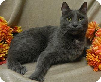 Domestic Shorthair Cat for adoption in Columbus, Nebraska - Diana