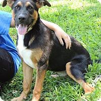 Adopt A Pet :: Ferris - Joplin, MO
