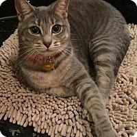 Adopt A Pet :: Luna - Tampa, FL