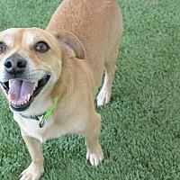 Adopt A Pet :: Spunky - Meridian, ID