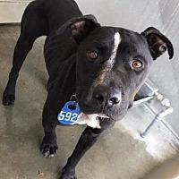 Adopt A Pet :: Reuben Meyer - Seattle, WA