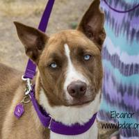 Adopt A Pet :: Eleanor - Cheyenne, WY