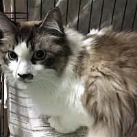Adopt A Pet :: 17-09-2875b Sully - Dallas, GA