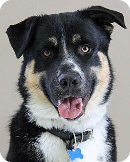 German Shepherd Dog Mix Dog for adoption in Winnipeg, Manitoba - Foster
