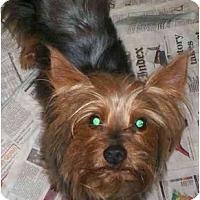 Adopt A Pet :: Maxwell - Richmond, VA
