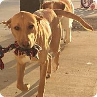 Adopt A Pet :: Daisy - Cumming, GA