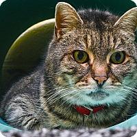 Adopt A Pet :: Missy - Pittsburg, KS