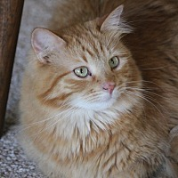 Adopt A Pet :: Peace - Rawlins, WY