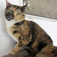 Adopt A Pet :: Dee Dee - Elkins, WV