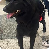 Adopt A Pet :: Maggie - North Richland Hills, TX