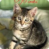 Adopt A Pet :: Nadia - Island Park, NY