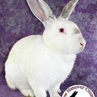 Californian for adoption in Wilmington, North Carolina - Oleander
