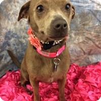 Adopt A Pet :: Hana - Lake Elsinore, CA