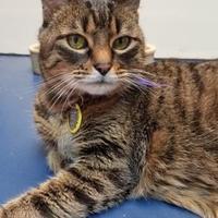 Adopt A Pet :: Chloe - Corvallis, OR