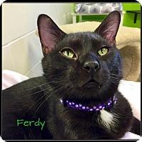 Adopt A Pet :: Ferdy- SPONSORED ADOPTION FEE - Jasper, IN
