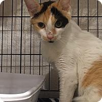 Adopt A Pet :: Salsa - Boca Raton, FL