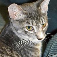 Adopt A Pet :: Grayson - Albemarle, NC