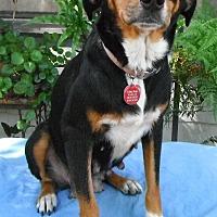 Adopt A Pet :: Jordan - Bedminster, NJ