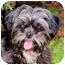 Photo 2 - Shih Tzu Dog for adoption in Mahwah, New Jersey - Tiffany