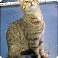 Adopt A Pet :: Jughead - Alexandria, VA