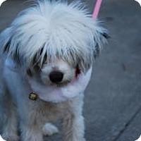 Adopt A Pet :: Farrah - New Milford, CT