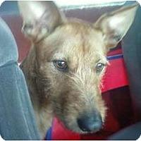 Adopt A Pet :: Tyson in OK - Oklahoma City, OK