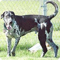 Adopt A Pet :: Simba - York, PA