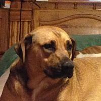 Adopt A Pet :: Wednesday - Royse City, TX