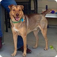 Adopt A Pet :: Starfish - Austin, TX