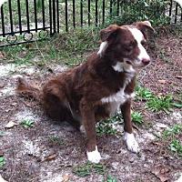 Adopt A Pet :: Grace - Columbia, SC